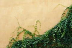 Pared amarilla con la planta Fotos de archivo