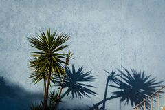 Pared azul y plantas tropicales foto de archivo