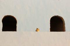 Pared blanca con el gato (siesta) Imagenes de archivo