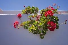 Pared blanca típica con Canarias de las flores Fotos de archivo libres de regalías