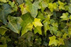 Pared Bogotá Colombia de Monserrat Ivy Imágenes de archivo libres de regalías