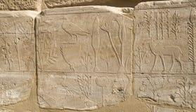 Pared con el catálogo ilustrado tallado de los animales y de las plantas exóticos de Asia en el templo de Karnak, Luxor imágenes de archivo libres de regalías