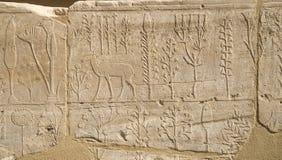 Pared con el catálogo ilustrado tallado de los animales y de las plantas exóticos de Asia en el templo de Karnak, Luxor, Egipto imágenes de archivo libres de regalías