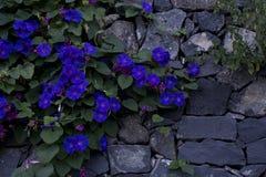 Pared con las flores foto de archivo libre de regalías