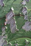 Pared corrosiva del metal Foto de archivo libre de regalías