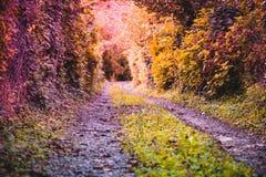 pared cubierta con las hojas de las hojas y de los árboles salvajes de la hiedra alrededor Imagenes de archivo