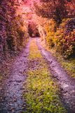 pared cubierta con las hojas de las hojas y de los árboles salvajes de la hiedra alrededor Fotografía de archivo libre de regalías