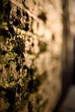 Pared cubierta de musgo imagenes de archivo