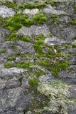 Pared cubierta de musgo Fotografía de archivo