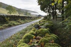 Pared cubierta de musgo en los valles Foto de archivo