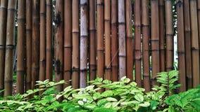 Pared de bambú Foto de archivo libre de regalías