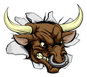 Pared de carga de Bull Foto de archivo libre de regalías