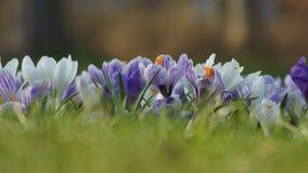 Pared de flores fotografía de archivo