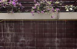 Pared de la casa con las flores de la buganvilla Foto de archivo