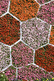 Pared de la flor Fotografía de archivo libre de regalías