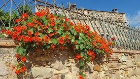Pared de la flor Foto de archivo