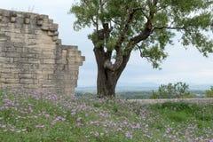 Pared de la fortaleza de la piedra caliza con el árbol y flores, opinión del paisaje de la montaña en fondo Fotos de archivo