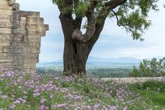 Pared de la fortaleza de la piedra caliza con el árbol y flores, opinión del paisaje de la montaña en fondo Imágenes de archivo libres de regalías