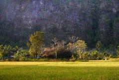 Pared de la roca del karst en Ramang-ramang Imagen de archivo libre de regalías