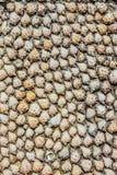 Pared de la textura de las conchas marinas Foto de archivo