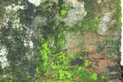 Pared de la textura verde del musgo fotos de archivo