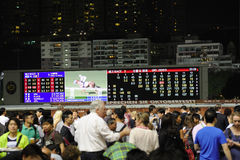 Pared de la TV de la carrera de caballos Foto de archivo libre de regalías