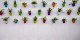pared de ladrillo blanca con las plantas coloridas y los potes que cuelgan en ella foto de archivo libre de regalías
