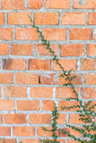 Pared de ladrillo con la hierba Imagen de archivo