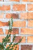 Pared de ladrillo con la hierba Foto de archivo libre de regalías