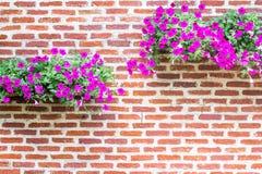 Pared de ladrillo con las flores Imagen de archivo