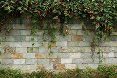 Pared de ladrillo con las flores en el top y la parte inferior Fotografía de archivo