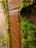 Pared de ladrillo cubierta de musgo imagen de archivo