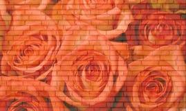 Pared de ladrillo de las rosas Fotografía de archivo libre de regalías