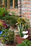 Pared de ladrillo rústica alineada con las plantas en latas de la leche Foto de archivo
