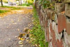 Pared de ladrillo roja en día del otoño fotografía de archivo libre de regalías
