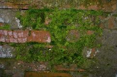 Pared de ladrillo vieja con el musgo Imagen de archivo libre de regalías
