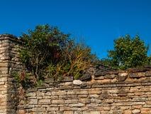 Pared de ladrillo vieja con los arbustos verdes en el top Fotografía de archivo libre de regalías