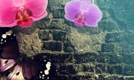 Pared de ladrillo vieja, mariposa y flores mágicas Fondo del vintage de la inspiración de la fantasía imagen de archivo libre de regalías