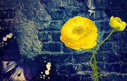 Pared de ladrillo vieja, mariposa y flores mágicas Fondo del vintage de la inspiración de la fantasía fotografía de archivo libre de regalías