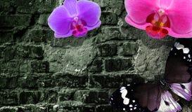 Pared de ladrillo vieja, mariposa y flores mágicas Fondo del vintage de la inspiración de la fantasía foto de archivo