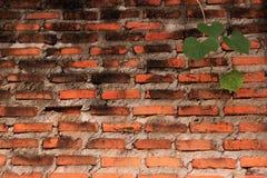 Pared de ladrillo y hojas viejas Fotografía de archivo libre de regalías