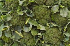 Pared de las cabezas del bróculi Foto de archivo libre de regalías