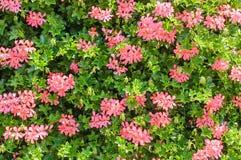 Pared de las flores Fotografía de archivo