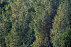Pared de los árboles del otoño en el bosque Foto de archivo libre de regalías