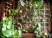 Pared de madera de bambú de la red y de la teca y jardín verde foto de archivo