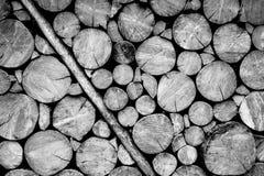 Pared de madera del registro blanco y negro Imagenes de archivo