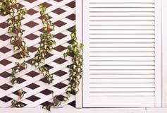 Pared de madera de la fachada del enrejado con la planta joven de la hiedra que teje Fotografía de archivo