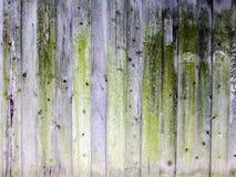 Pared de madera verde Fotos de archivo