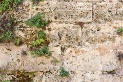 Pared de piedra antigua cubierta con las plantas Fotografía de archivo libre de regalías