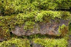 Pared de piedra con el musgo Imágenes de archivo libres de regalías